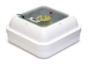 Best Affordable Chicken Egg Incubator