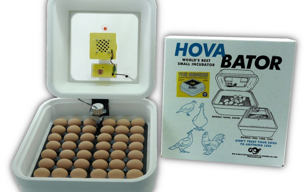 HovaBator Genesis 1588 Advanced Egg Incubator Combo Kit Review